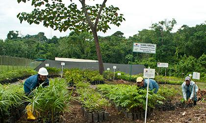 Reforestación y restauración ecológica